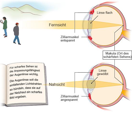 Grafik: Anpassung an Nah- und Fernrsicht - wie im Text beschrieben