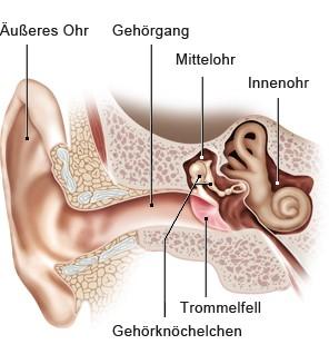 Grafik: Äußeres Ohr, Mittelohr und Innenohr - wie im Text beschrieben
