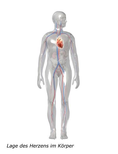 Grafik: Lage des Herzens im Körper