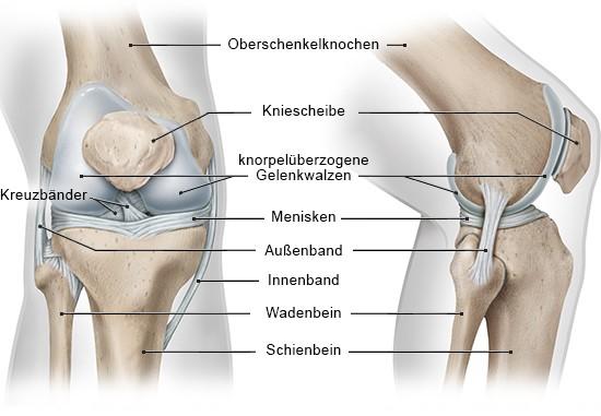 Wie funktioniert das Knie? - gesundheitsinformation.de