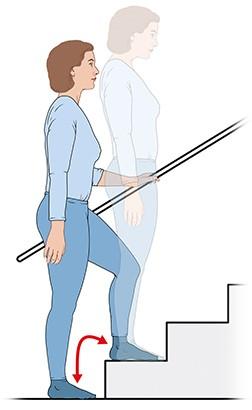 Grafik: Übung 1: Step-ups - wie im Text beschrieben