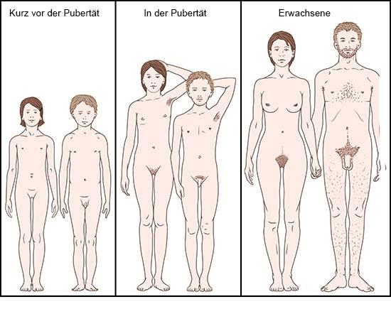 Grafik: Körperliche Veränderungen im Verlauf